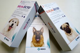 Bravecto flea and tick treatment for dogs